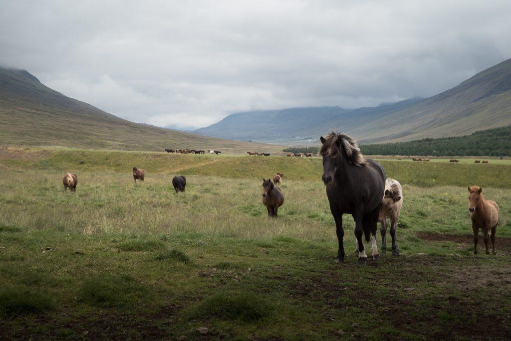 Budget pour 8 jours en Islande