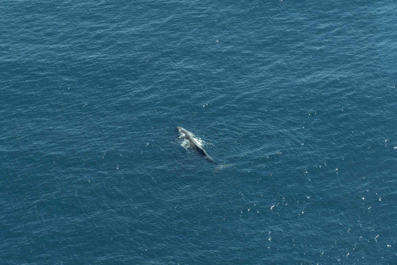 Vol au dessus de la péninsule de Kaikoura Baleine