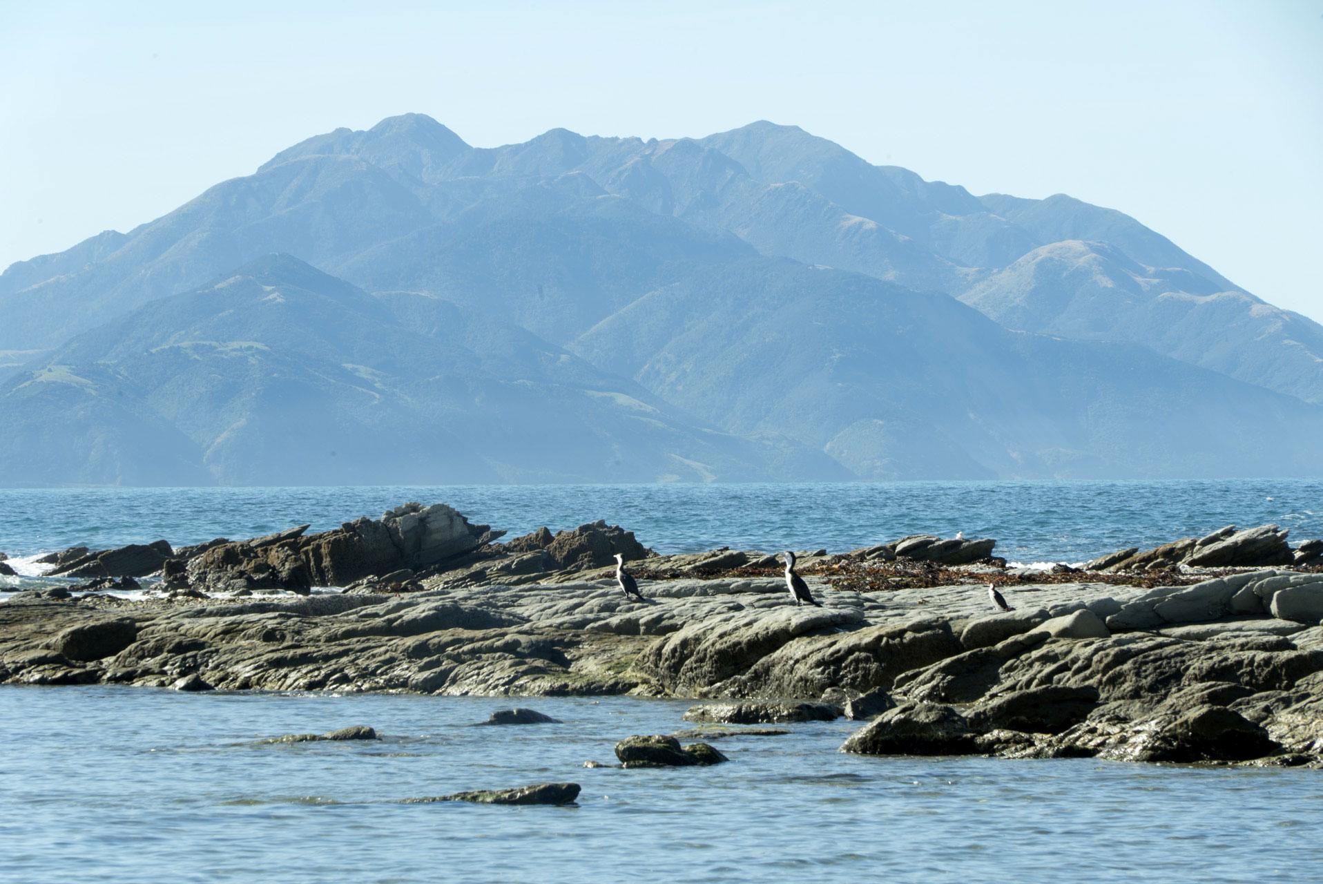 Road trip Nouvelle Zélande Île du Sud 5 jours Kaikoura
