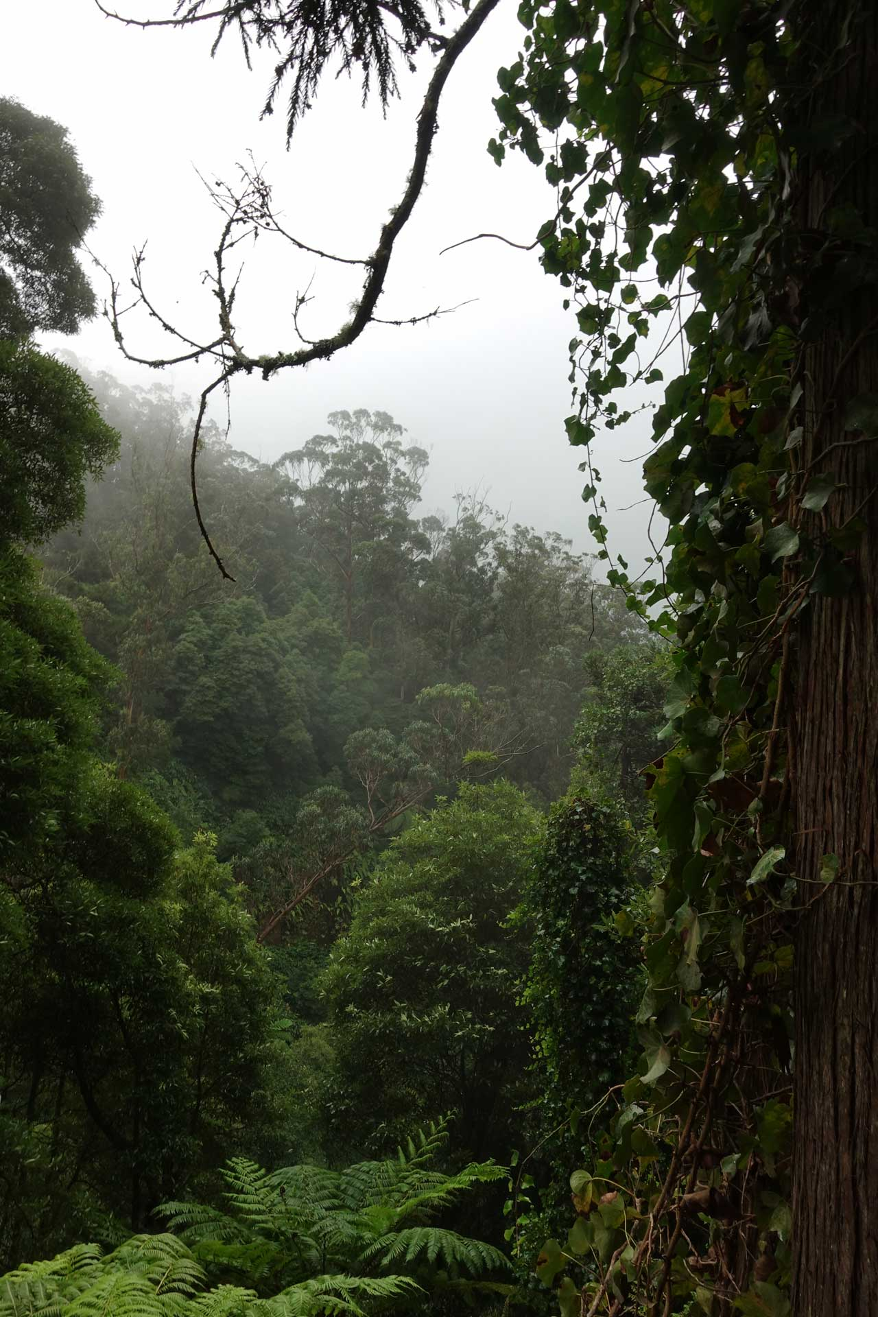 Programme pour une semaine aux Açores (Sao Miguel) Caldeira Velha