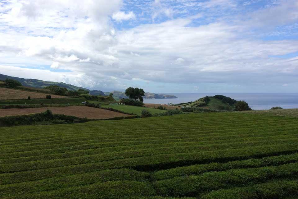 Programme pour une semaine aux Açores (Sao Miguel) Maia