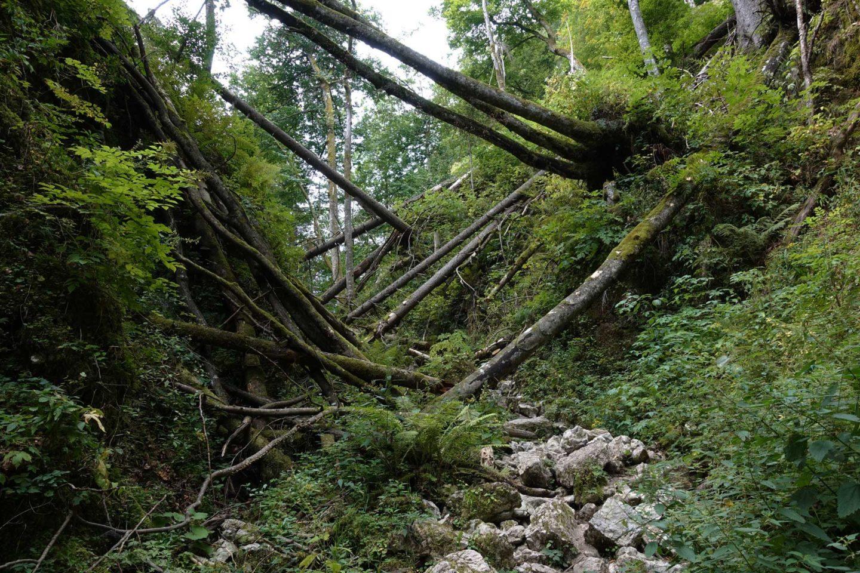 Gorges de Pokljuka