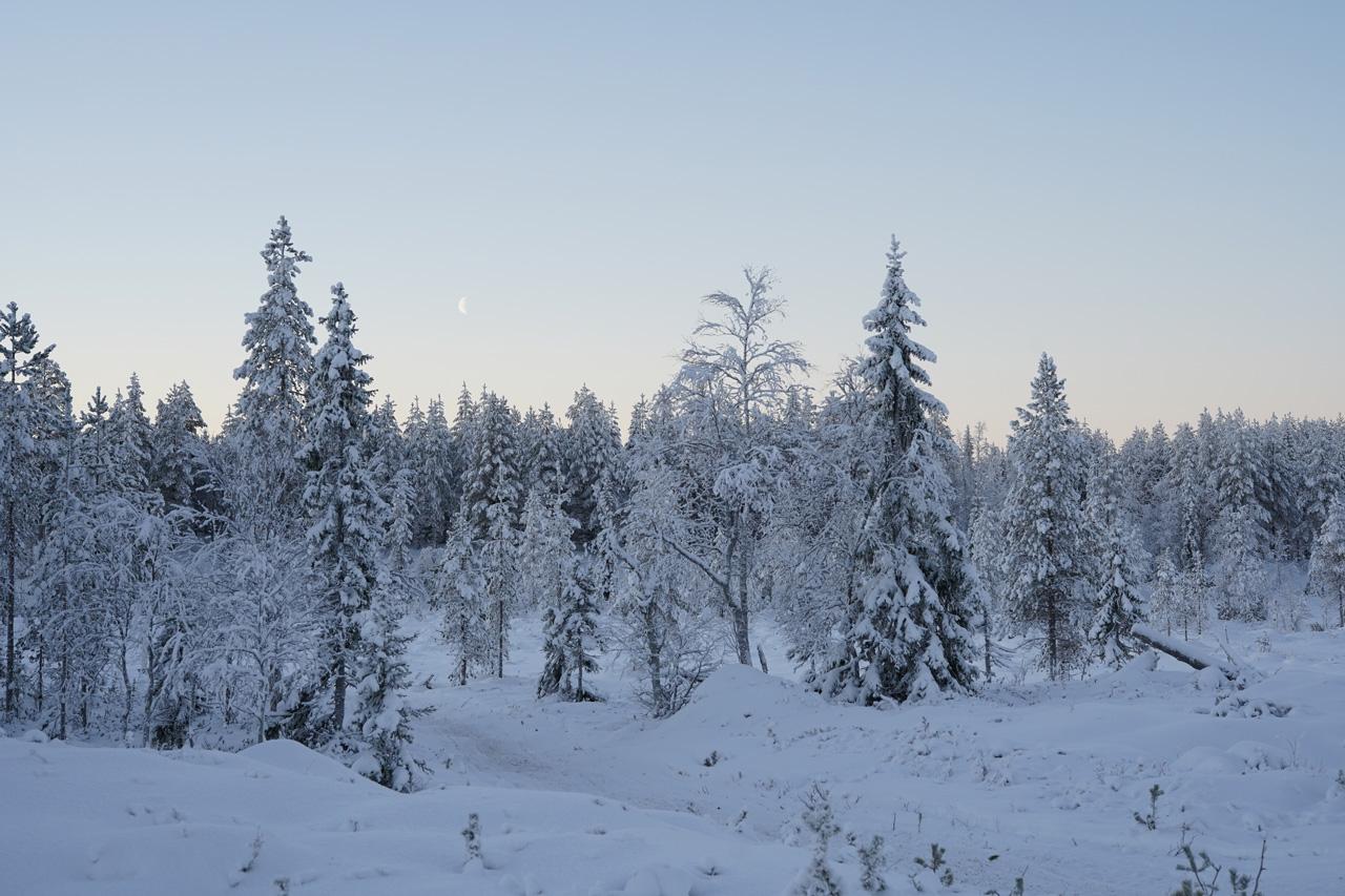 Laponie Finlandaise Décembre Paysage