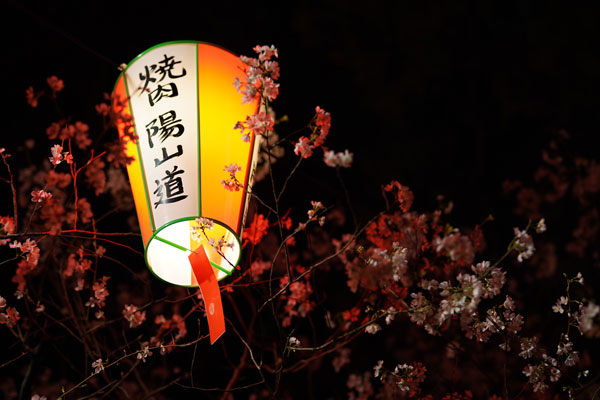 hanami parc ueno