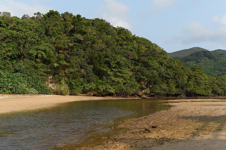mangroves Ishigaki