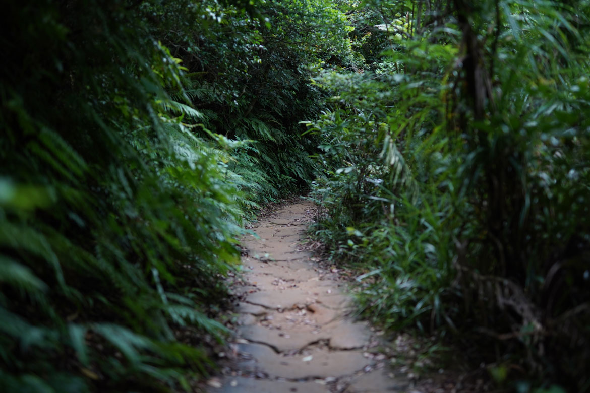 trekking jungle Iriomote