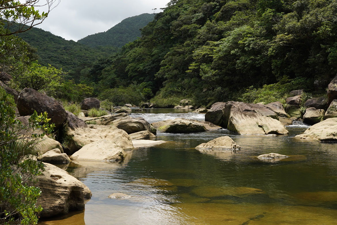 Urauchi River trekking jungle Iriomote