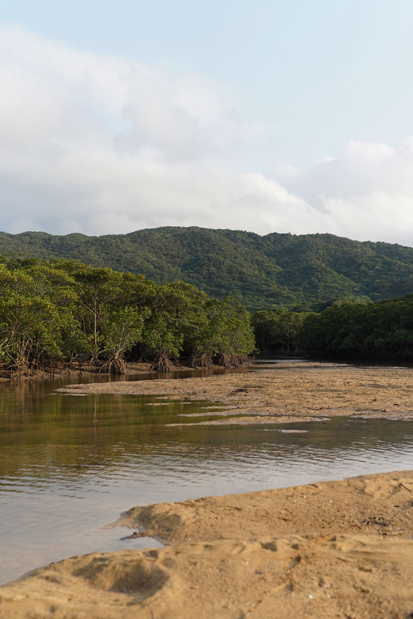 Mangroves de la rivière Fukido