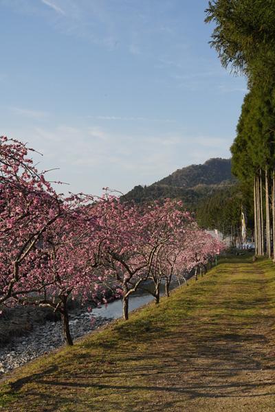 Château de Takane Shizuoka