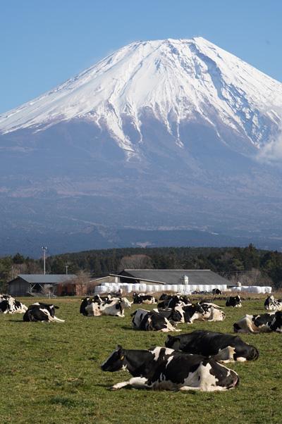 Plateau Asagiri Mont Fuji