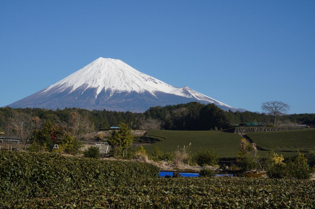 champ de thé mont Fuji Shizuoka