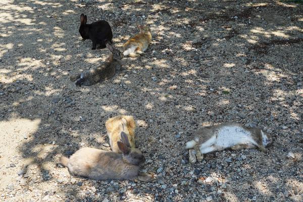Okunoshima île aux lapins japon