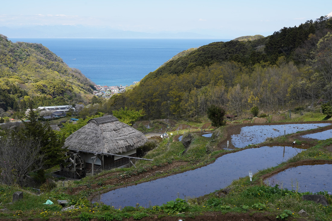 rizières terrasse Ishibu